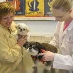 Avenues Pet Hospital